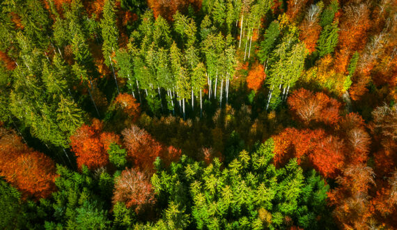 DJI_0176 - From Above